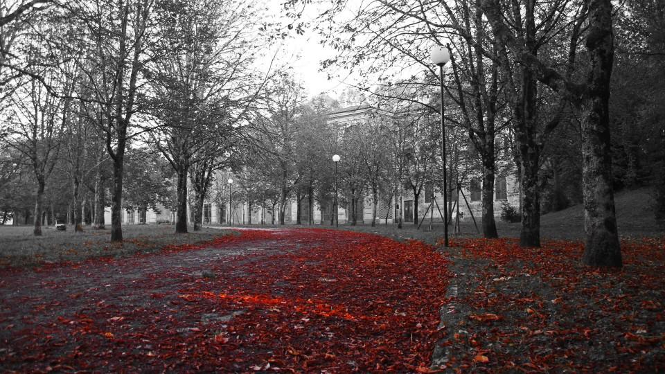 Fall Abandoned